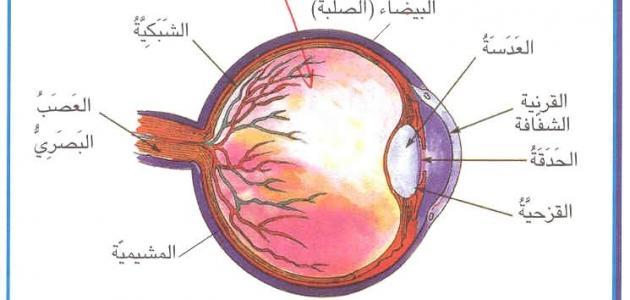 صورة مكونات العين , مكونات اهم عضو في الانسان العين