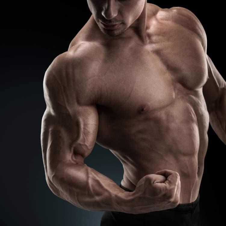 صورة كم عدد عضلات جسم الانسان , تعرف على عددهم