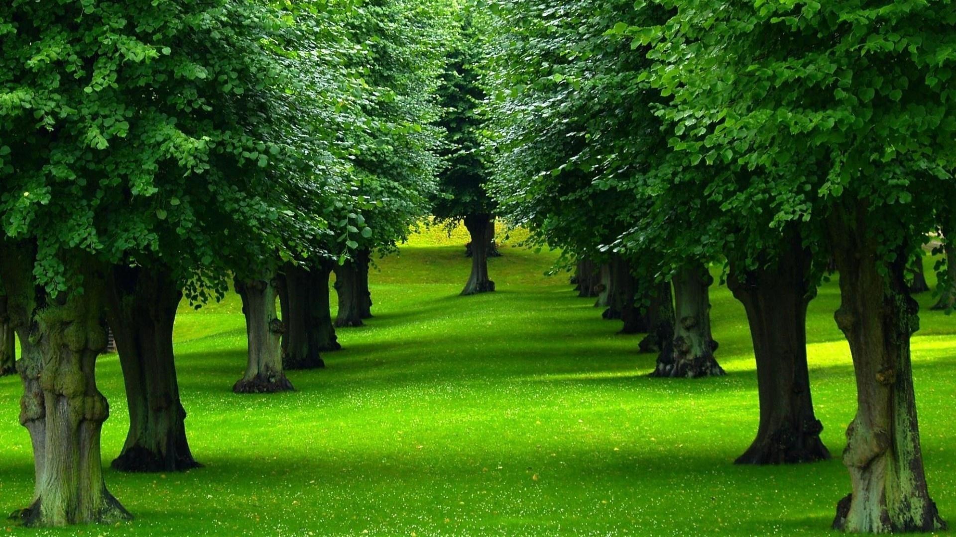 صورة صور اشجار , اجمل صور الاشجار 2020