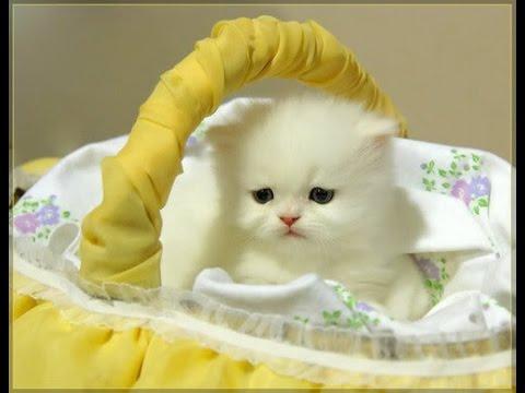صورة صور قطط متحركة , اجمل صور القطط الكيوت