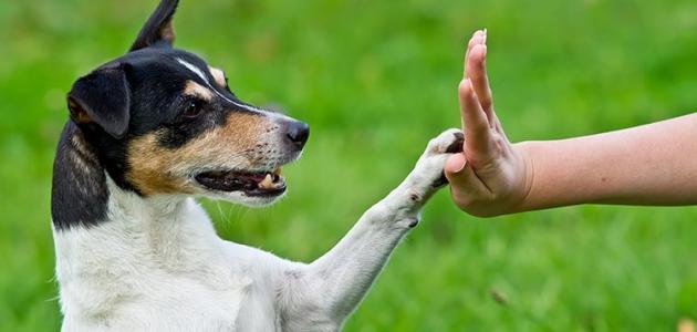 صورة كيفية تدريب الكلاب , الطريقة الصحيحة لتدريب الكلاب
