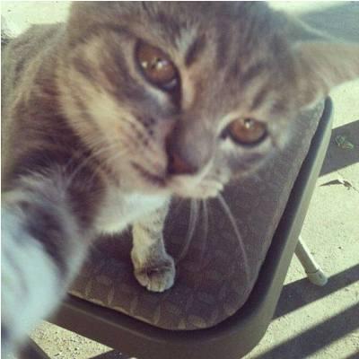 صورة صور قطط مضحكة , سيلفى قطط مضحك