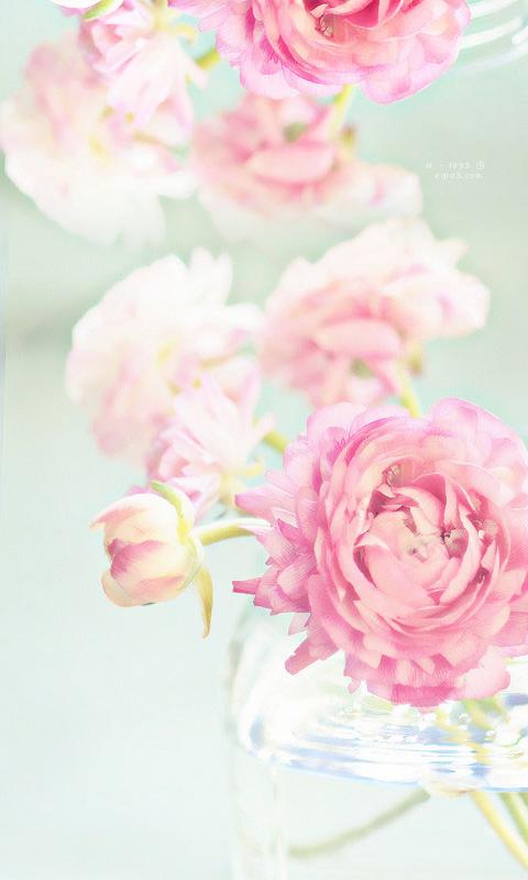 صورة خلفيات ورد , اجمل الكروت التي تحمل الورود