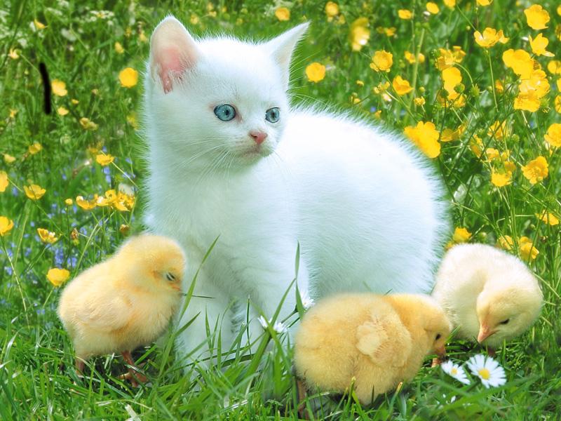 صور حيوانات اليفة , رمزيات لالطف الحيوانات التي يمكن تربيتها في المنزل او الحديقة