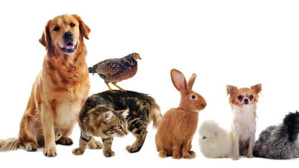صورة حيوانات اليفة , رمزيات لالطف الحيوانات التي يمكن تربيتها في المنزل او الحديقة