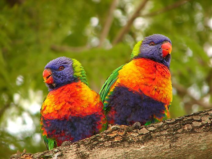 صورة اجمل طيور العالم , افضل الاشكال من الطيور في العالم