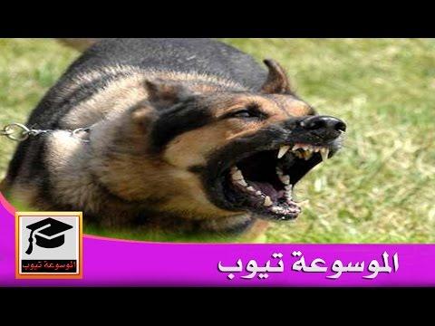 صورة انواع الكلاب , واشكالها المتنوعة في العالم بالصور والفيديو