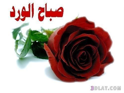 صورة ورد صباح الخير , اجمل الزهور عن الصباح