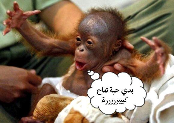 صورة اجمل الصور المضحكة مع التعليق , صور و تعليقات مضحكه جدا