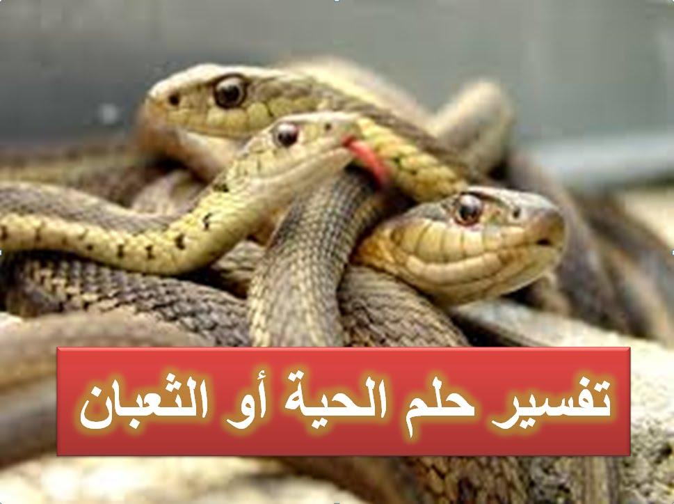 صورة تفسير حلم الثعابين في البيت , عبارات عن تفسير حلم الثعابين في البيت