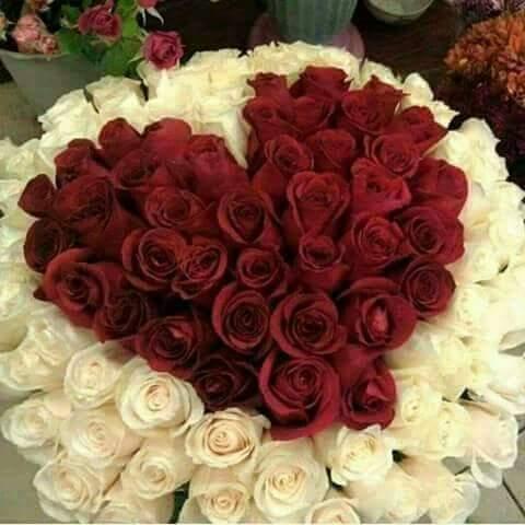 صور ورد رومانسي اجمل صور الورود الرومانسيه احساس ناعم