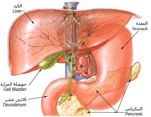صور اعراض سرطان المعدة , اهم الاعراض التى تدل على سرطان المعده