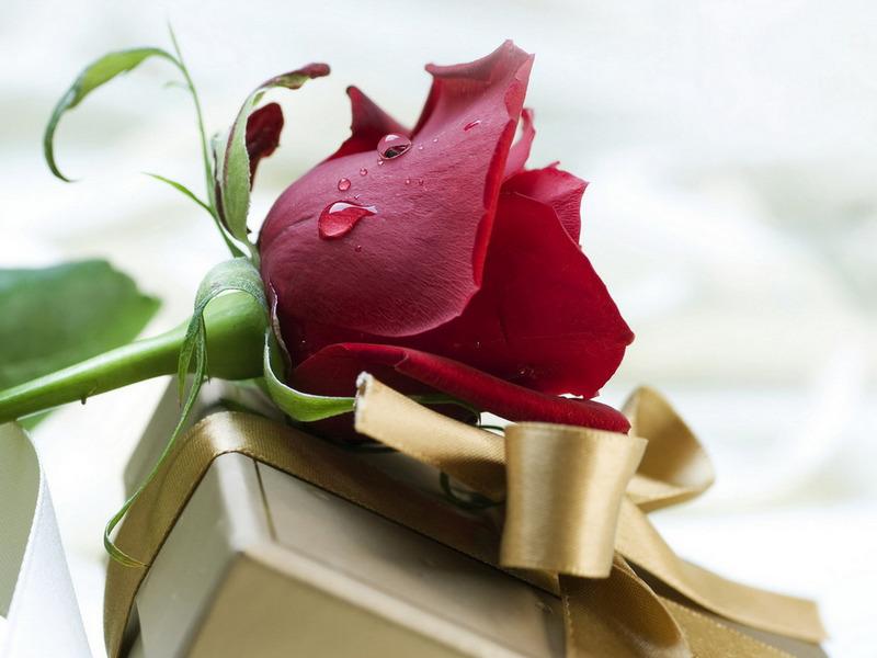 صورة صور ورد متحركه , اجمل الورود بالصور المتحركه