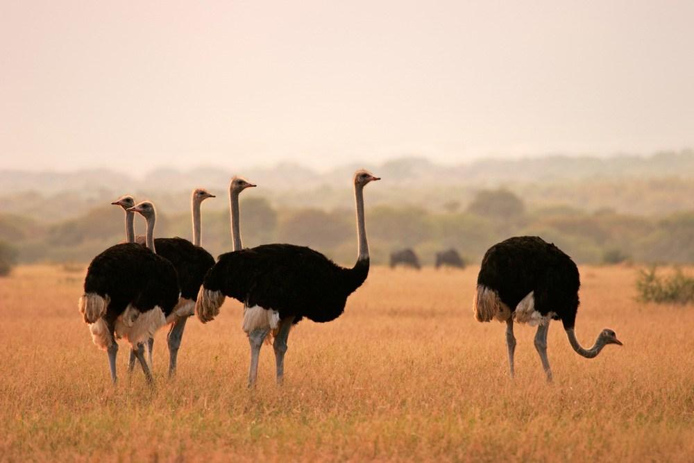 صورة ما هو الطائر الملقب بالطائر الجمل , اغرب الطيور التى تشبه الحيوانات