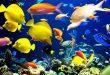 صور معلومات عن الاسماك , ما لا تعلمه عن الاسماك