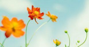 صور خلفيات زهور , صور زهور جميلة