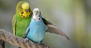 صورة صور عصافير , اجمل صور عصافير في العالم منها الملون والمتحرك