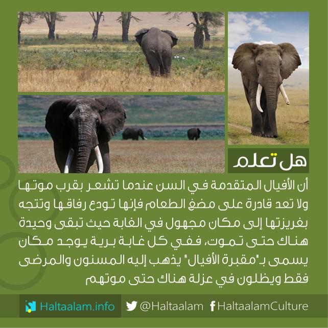 صورة معلومات عن الحيوانات , الاليفة والمفترس منها
