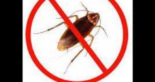 صورة القضاء على الصراصير , الحل النهائى للتخلص من الحشرات