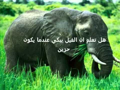 صورة هل تعلم عن الحيوانات , بعض المعلومات الهامه عن الحيوانات 3545 1