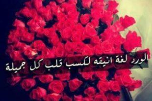 صورة كلمات عن الورد , اروع الكلمات في وصف الورد
