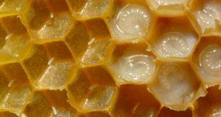 صورة فوائد غذاء ملكات النحل , العسل فيه شفاء للناس
