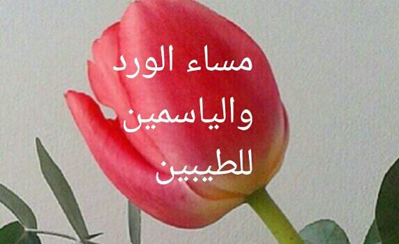 صور مساء الورد والياسمين , اجمل مساء على اجمل وردة