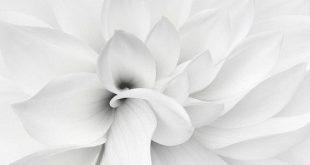صور خلفية بيضاء , شاهد روعة وجمال اللون الابيض في الخلفيات