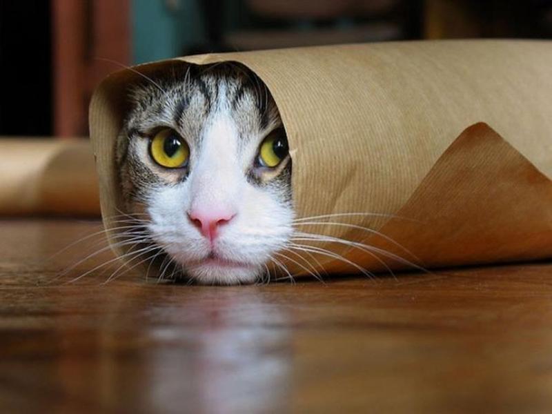 صور قطط وكلاب , الحيوانات الاليفة