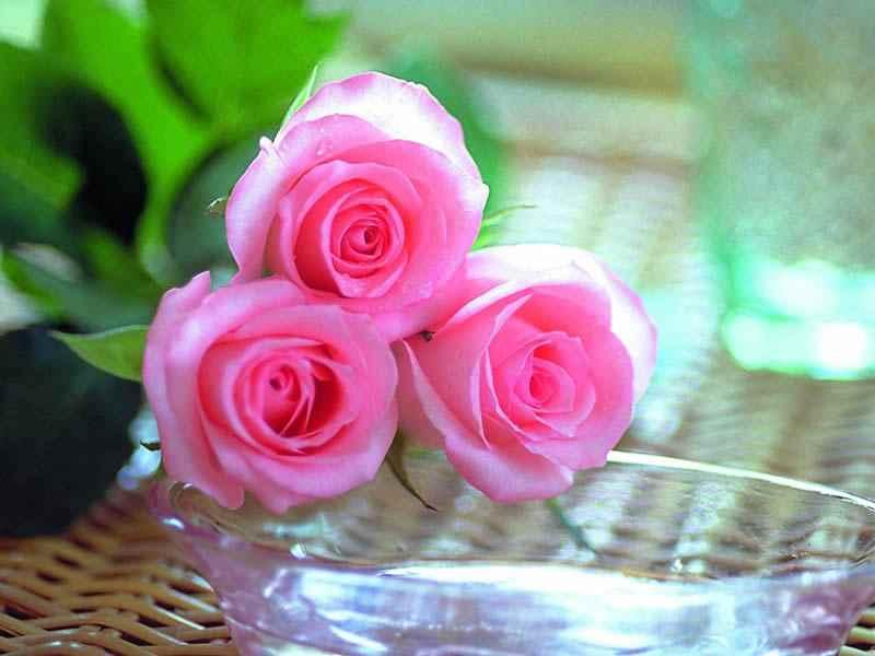 صورة اجمل ورود في العالم , احلى الازهار واجملها