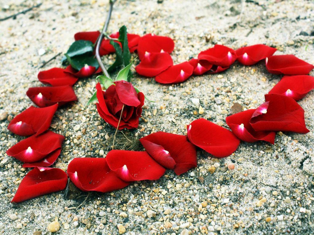 صورة زهور الحب , الحب وتبادل الورود والزهور للتعبير عن حبك