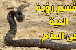 صور الثعابين في المنام , الثعبان وتفسيره في المنام والتخلص من الخوف