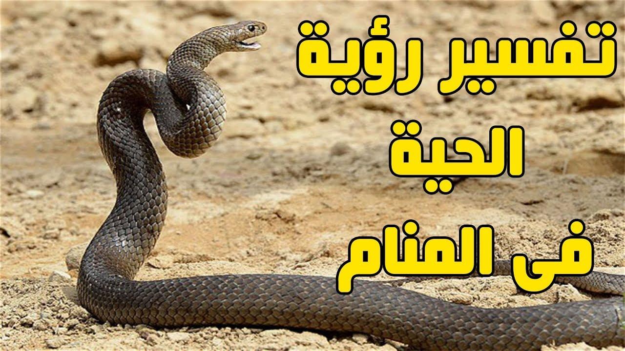 صورة الثعابين في المنام , الثعبان وتفسيره في المنام والتخلص من الخوف