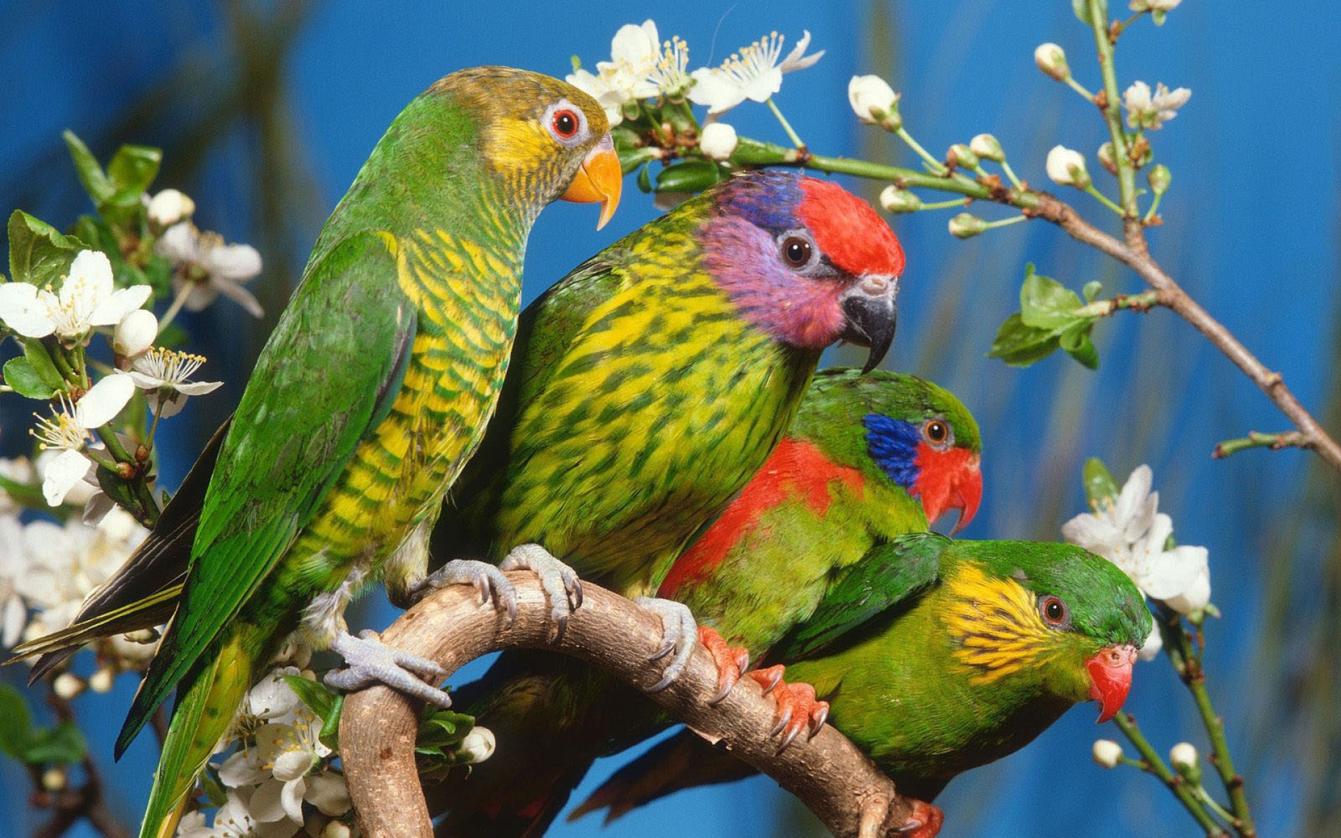صور اجمل الطيور في العالم , اجمل مخلوقات فى الطبيعه