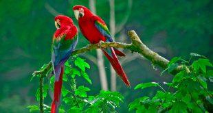 صورة اجمل الطيور في العالم , اجمل مخلوقات فى الطبيعه