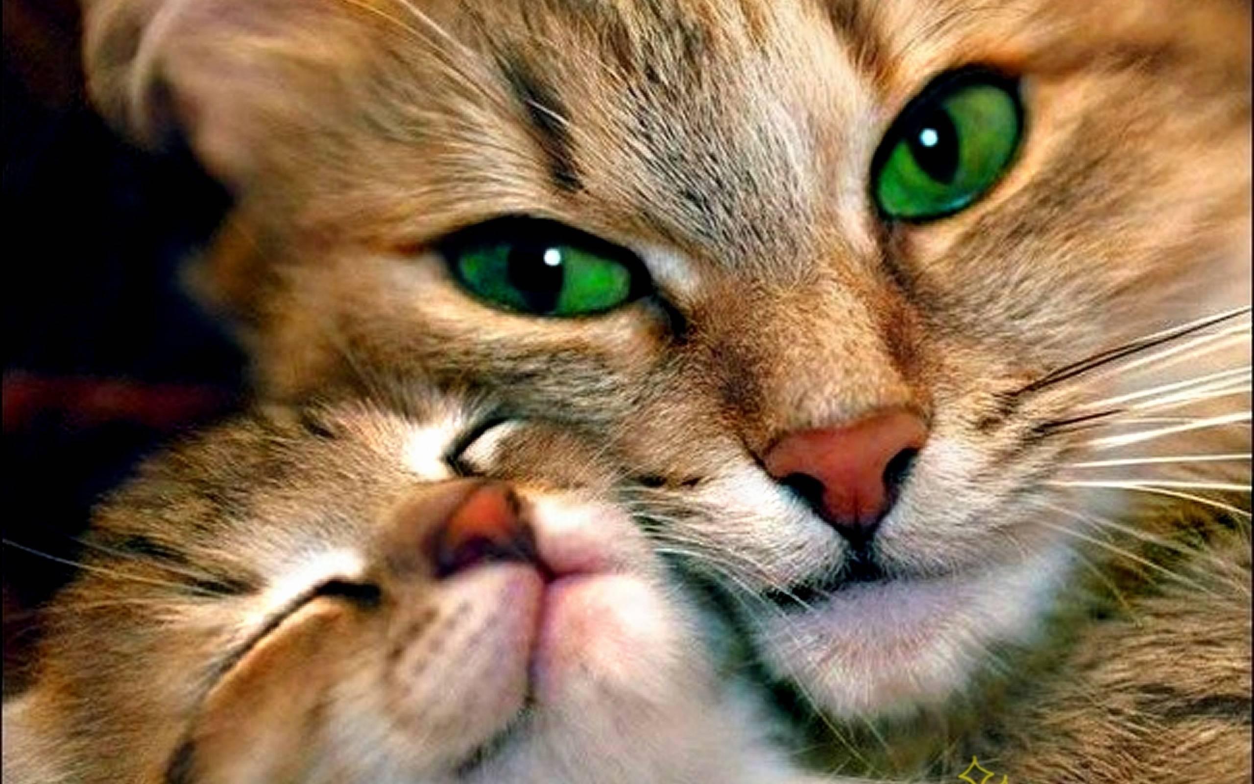 صورة اجمل صور قطط , تعرف على انواع واشكال ارق حيوان