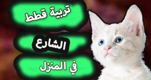 صورة كيفية تربية القطط , بتحبي القطط هقلك تعتني بيها ازاي