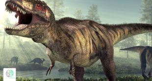 صورة معلومات عن الديناصورات، الكثير من المعلومات عليه