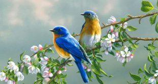 صورة صور طيور، من اجمل الصور