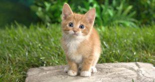 صورة صور حيوانات، لمحبي صور الحيوانات تحفك