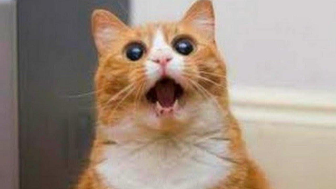 صورة قطط مضحكة ,  قطط تحفة عسولة خالص